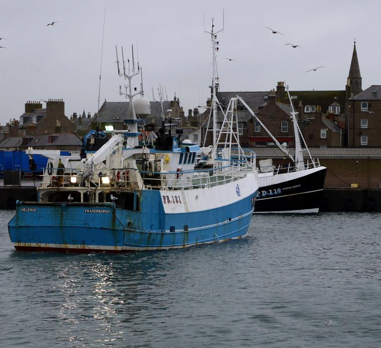 Scottish Fisheries Sustainable Accreditation Group North Sea haddock © Marine Stewardship Council